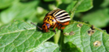 Lady-Bug-on-Leaf